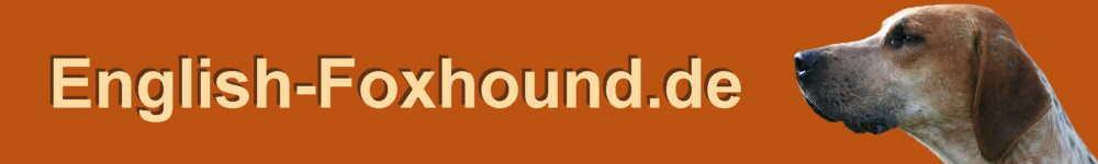 English Foxhound Hunde Informationen Rassebeschreibung Aussehen Charakter